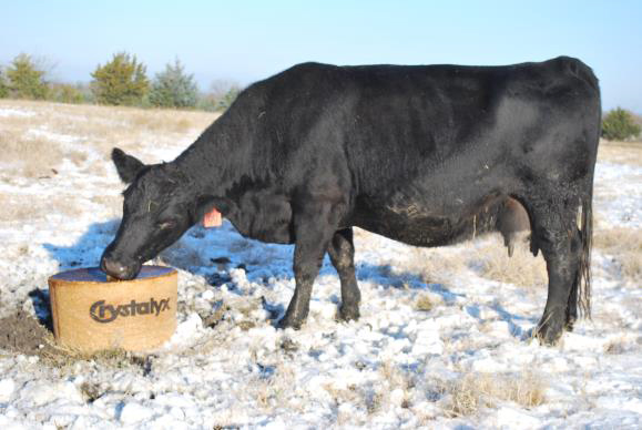 Supplementation with CRYSTALYX® products containing Bio-Mos® can help cattle utilize available forages and lower your overall feed inputs.