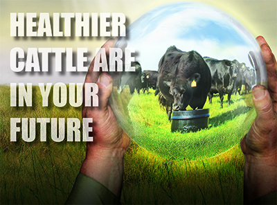 Healthier Cattle are in Your Future