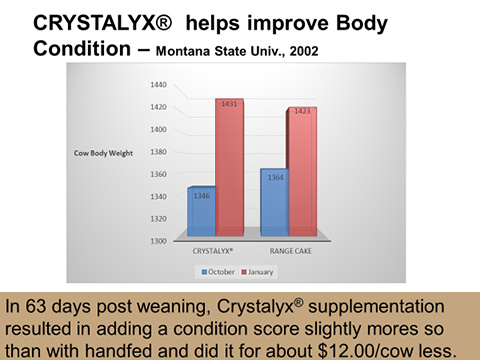 CRYSTALYX® Helps Improve Body Condition
