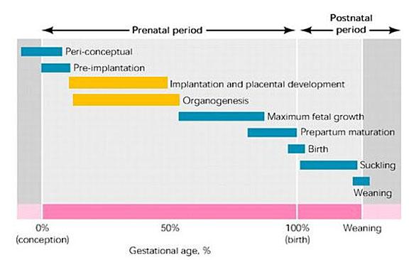 https://ridley-umbraco-media.s3.amazonaws.com/media/1125625/061918-early-gestation-chart.jpg?width=564&height=359