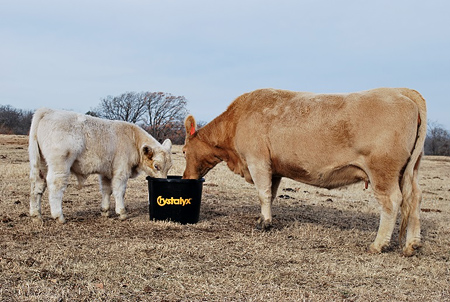 Protect your investment this calving season with CRYSTALYX<sup>®</sup>, because every calf counts!