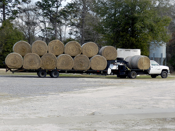 Use of CRYSTALYX<sup>®</sup> Brand supplements containing NPN can help you stretch your hay supply