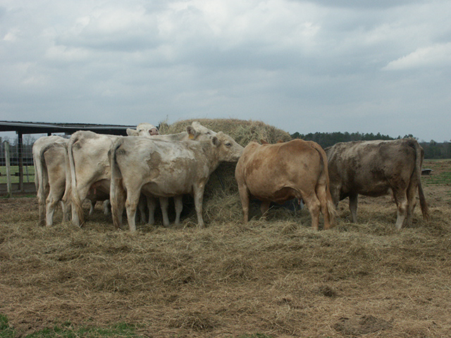 Drought has forced many cattle producers to start feeding hay early. As such, hay quantity and quality may be lacking this late into the feeding season