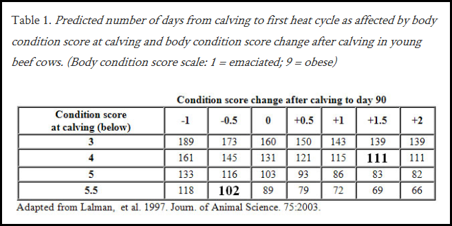 Body Condtion Scoring at Calving