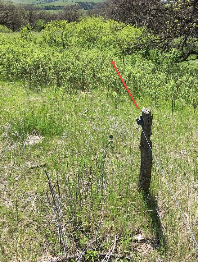 Note the electric fence being overgrown with brush